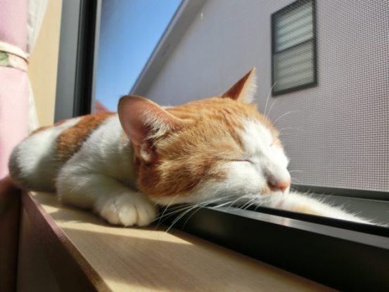 注文住宅に床暖房を導入する